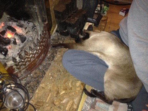 Siamese cat picture20111210-225539.jpg