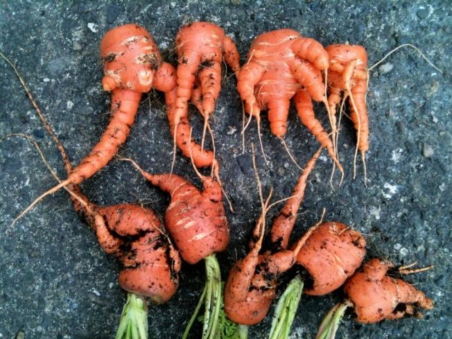 mandrake carrots.jpg