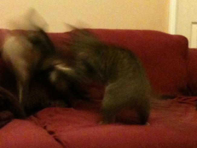 catfight1.jpg