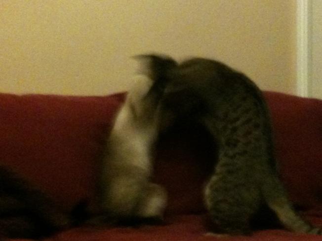 catfight3.jpg