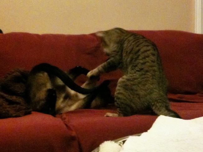 catfight4.jpg