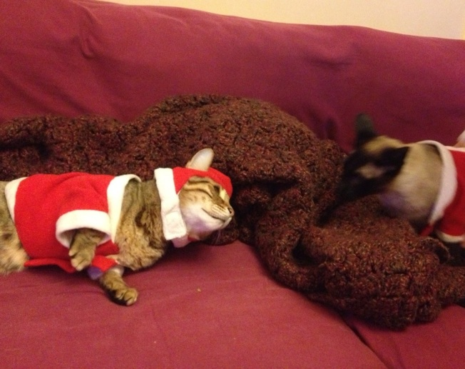 two cats in holiday clothes-211811.jpg