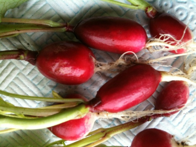French breakfast radishes.jpg